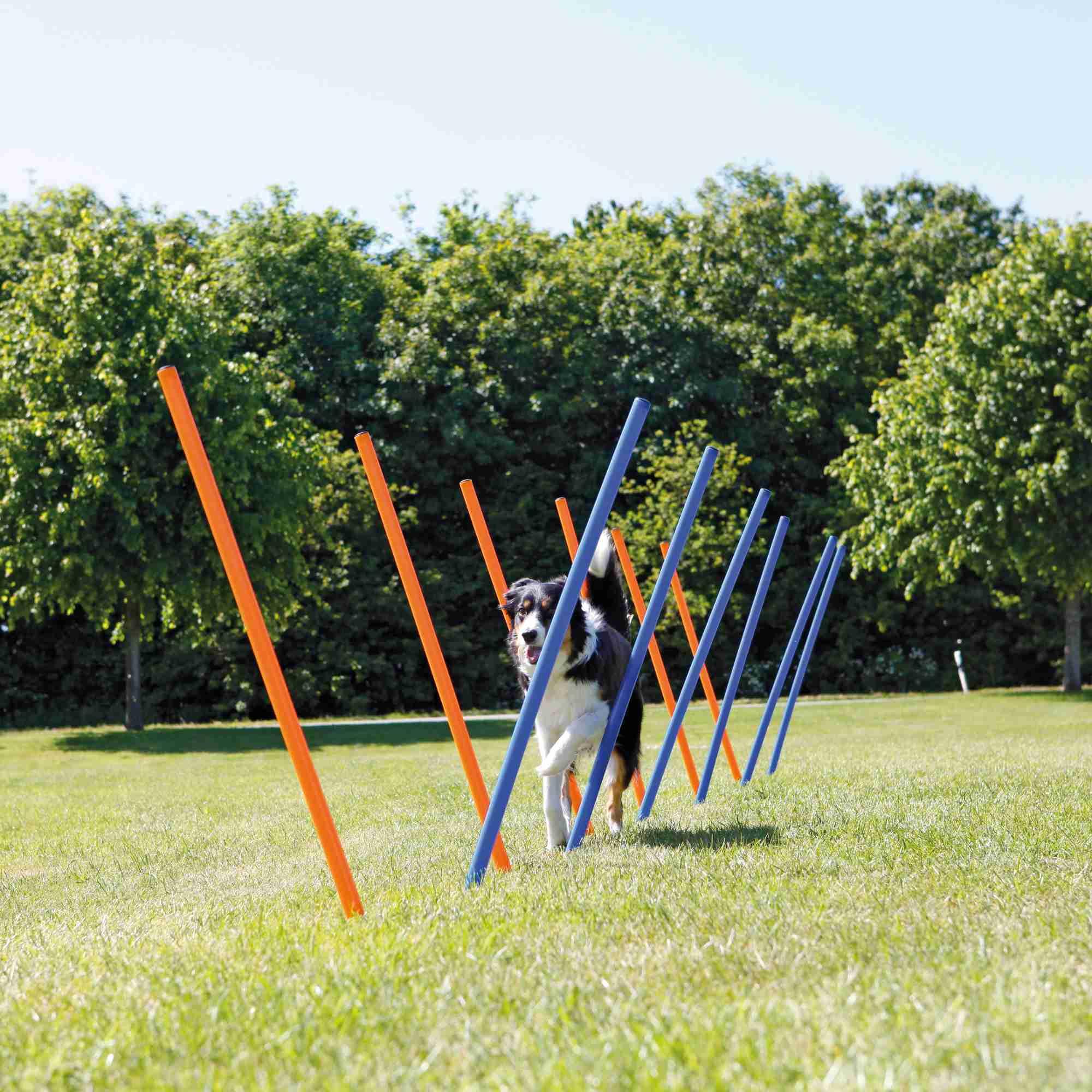 Trixie Dog Activity Agility Slalom, Kunststoff 115 × ø 3cm, 12 St., blau/orange