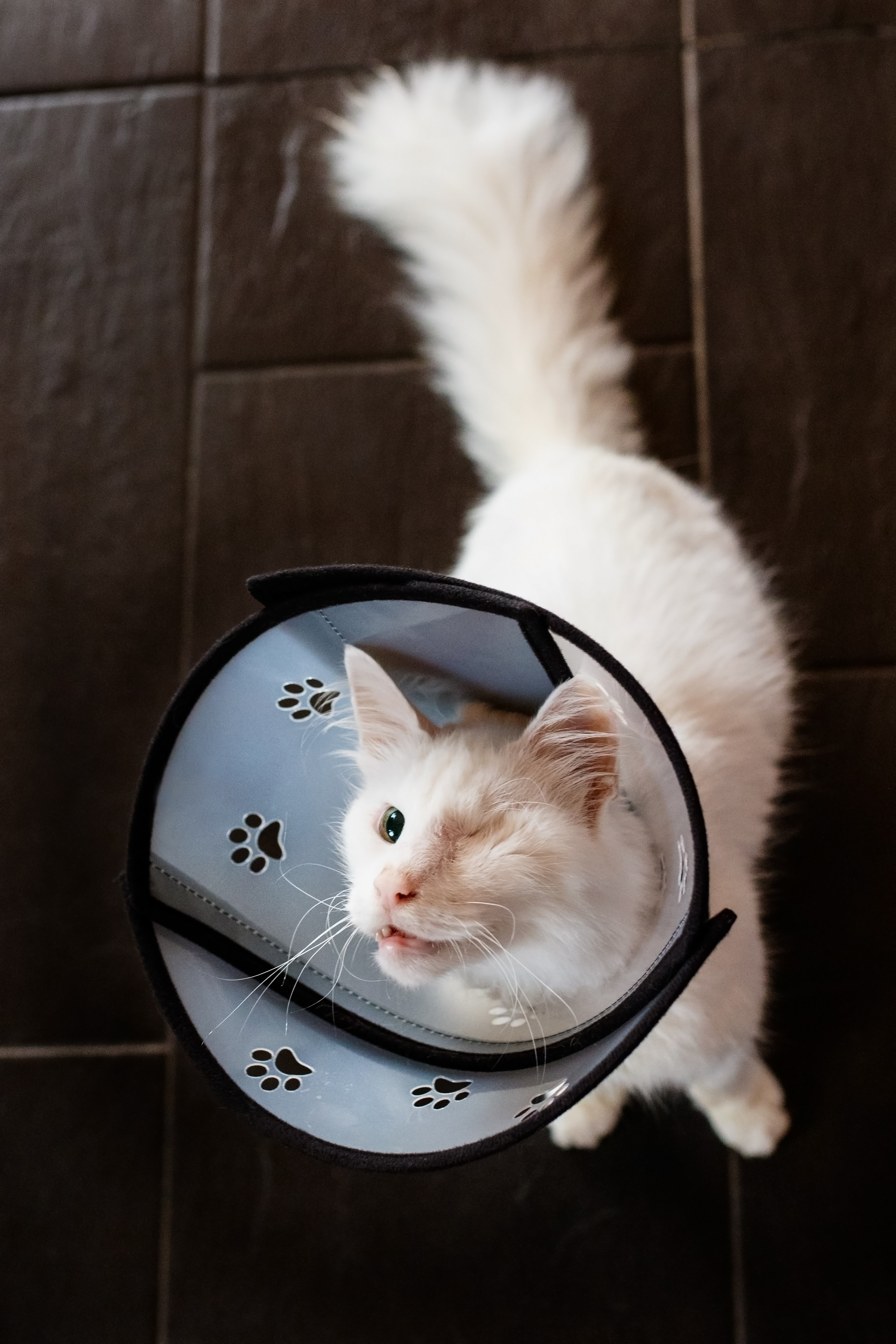 4cats Pet Airs Halskrause mit abnehmbarem Teilstück