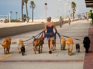 Dein erfolgreicher Start als Dogwalker/in