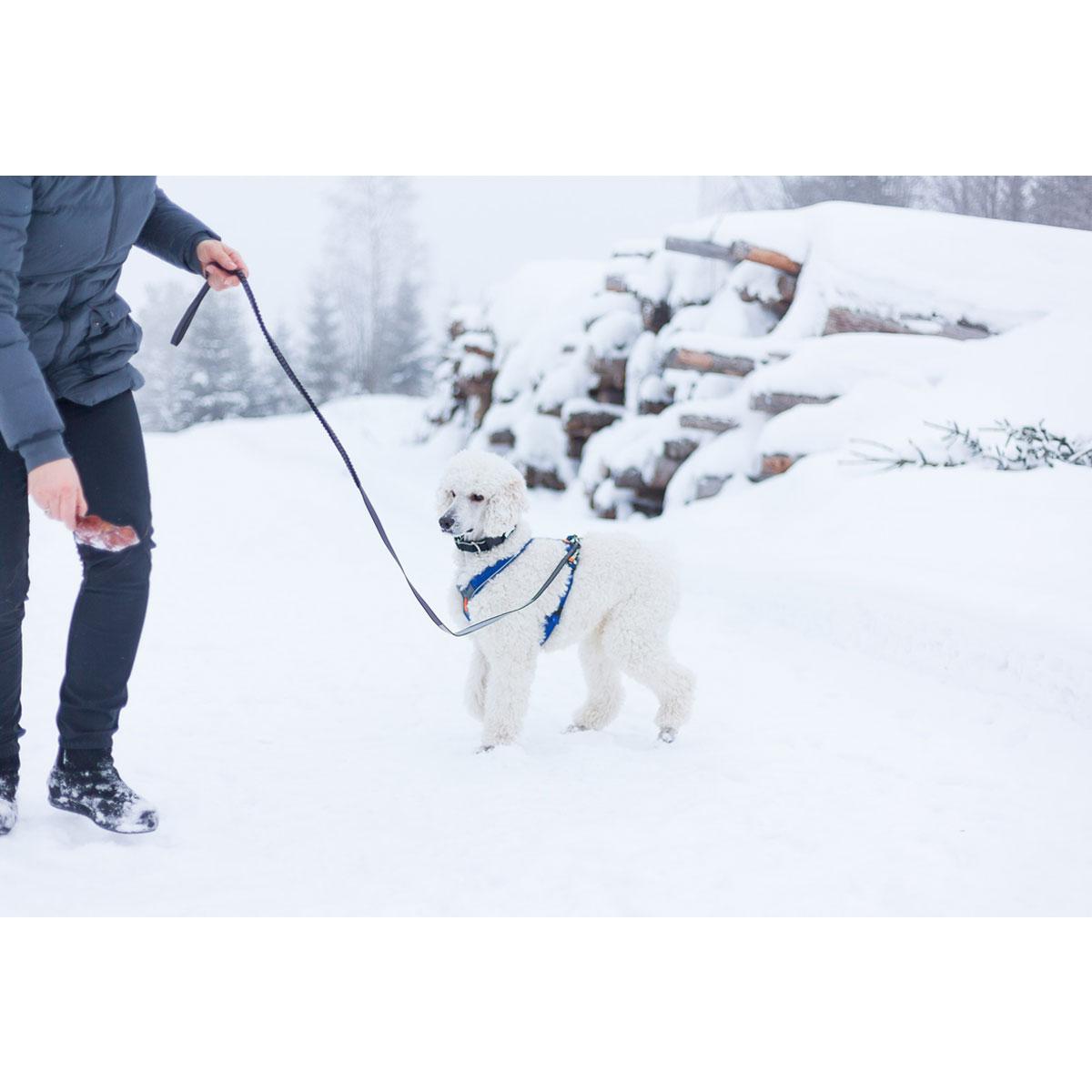Non-stop dogwear Bungee Touring Leash