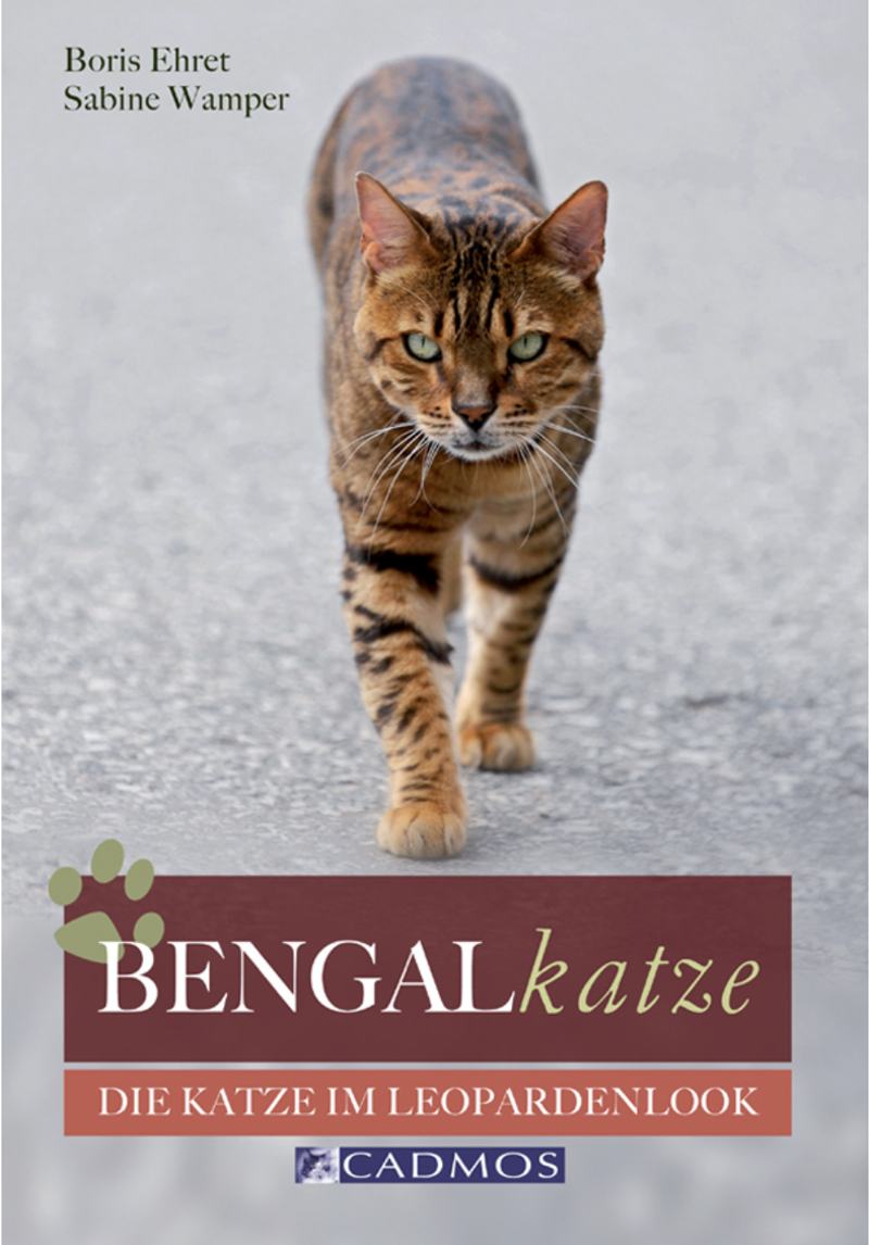Cadmos -Bengalkatze
