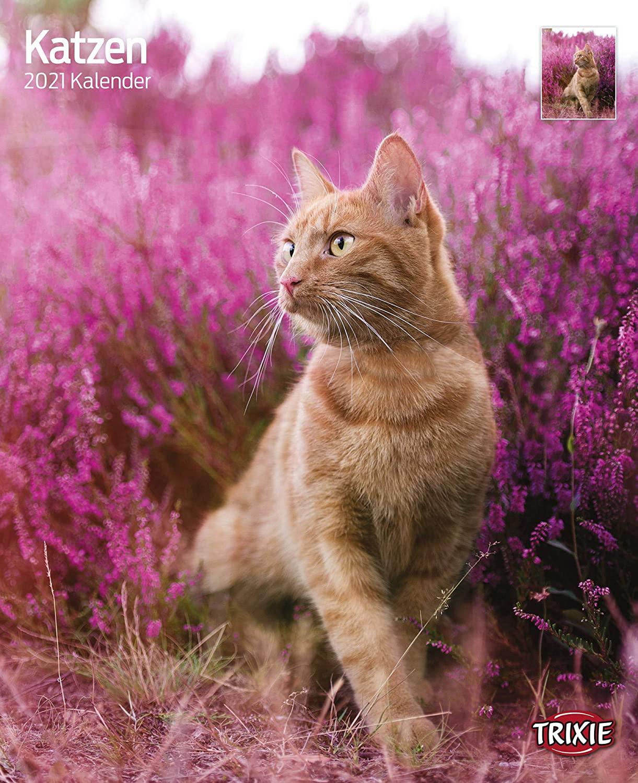 Trixie Kalender 2021 Katzen