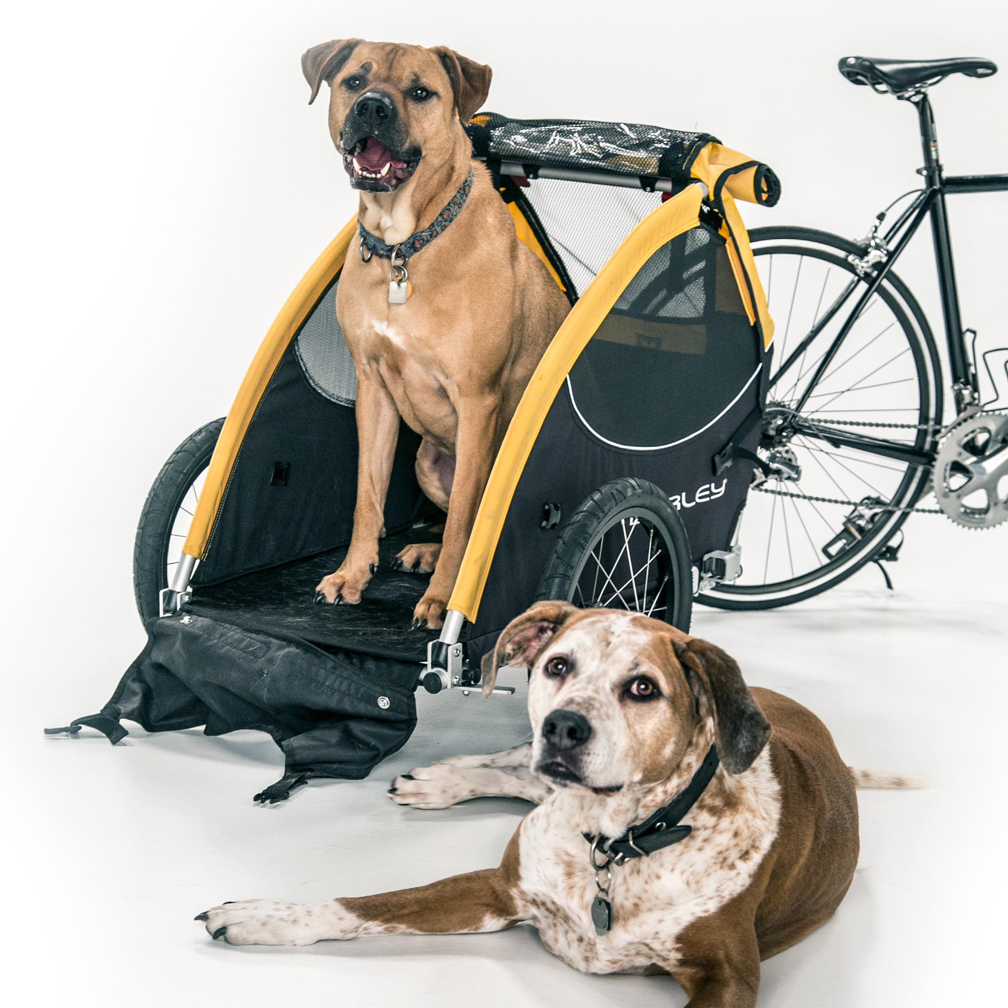 Burley Tail Wagon Fahrrad-Hundeanhänger