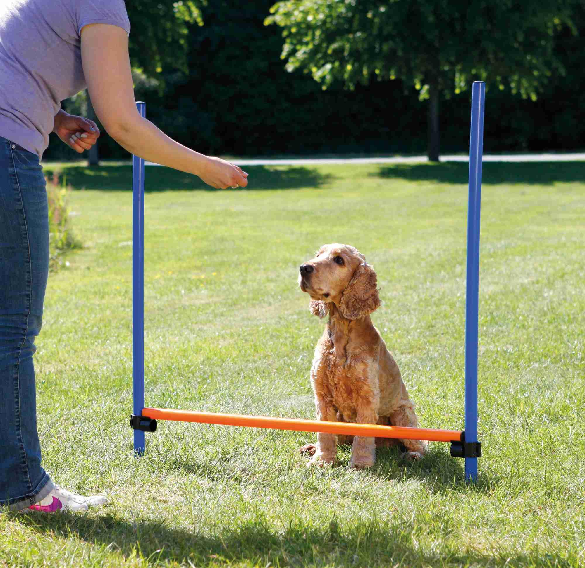 Trixie Dog Activity Agility Hürde, Kunststoff 123 × 115cm / ø 3cm, blau/orange