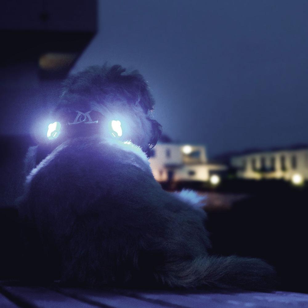 Curli luumi LED
